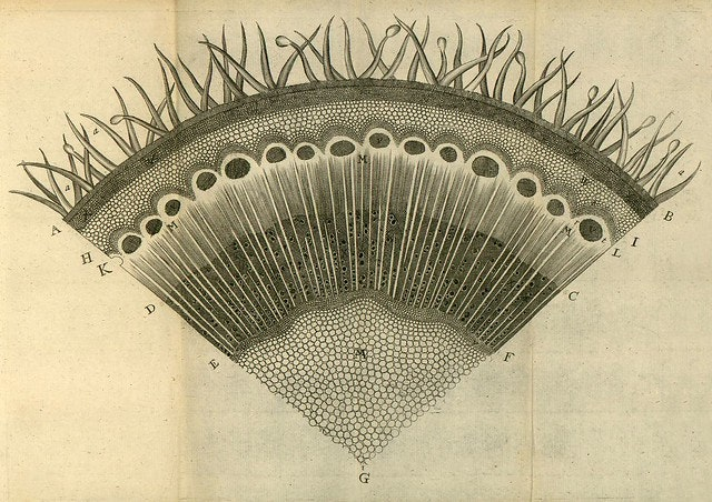Nehemiah Grew's Anatomy of Plants (1680) In the 82 illustrated plates included in his 1680 book The Anatomy of Plants, the English botanist Nehemiah Grew revealed for the first time the inner structure and function of plants in all their splendorous intricacy.