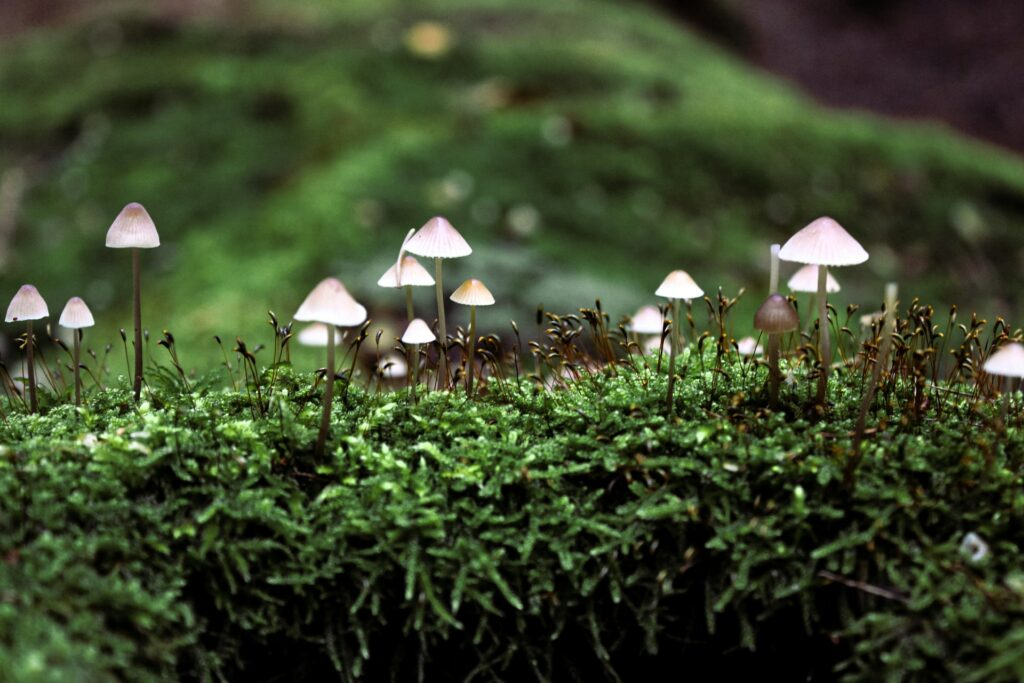 Mushrooms popping out of green moss